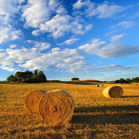 Bales of Straw at Stubble Field during Harvest