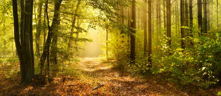Footpath through Enchanted Forest in Autumn, Morning Fog illuminated by Sunlight Stock Photo