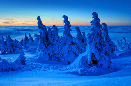 Winter sunrise on Mount Brocken, Above the Clouds, Fir Trees Bent by Snow, Harz National Park, Germany 写真素材