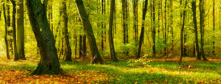 Natural Forest in Autumn. Touched by the warm light of the morning sun