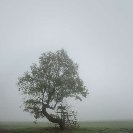 Crooked Tree with Deer Stand by Field at Foggy Landscape