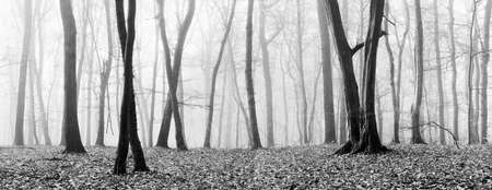 Panorama, Foggy Forest of Bare Trees in Autumn, Black and White, some vintage camera fx 免版税图像