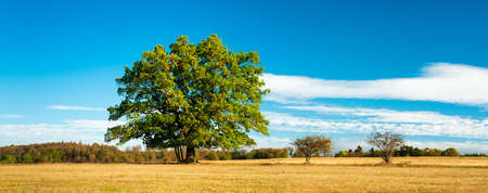 Panoramic Autumn Landscape with Tree on Meadow under blue sky