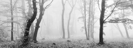 Foggy Forest in Autumn, Black and White Panorama
