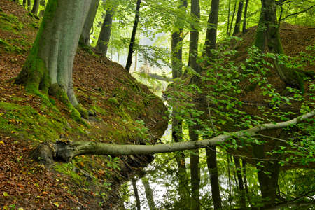 Lake in Natural Forest of old Beech Trees, Muritz National Park, Germany Stock Photo