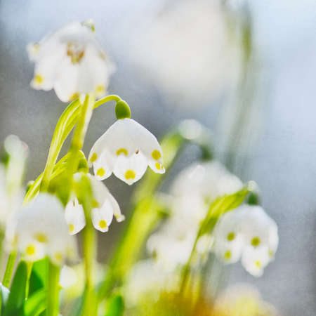 Spring snowflakes, selective focus, analogue look, some grain