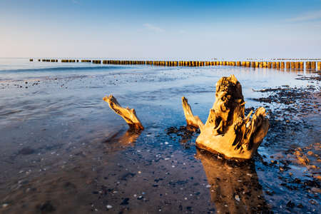 Beach with Tree Trunk and Wooden Groyne in the Sunlight, Darss peninsula, Germany