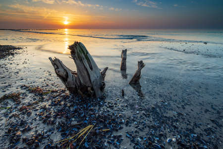Beach with old tree Trunk and Mussels at sunset, Darss peninsula, Germany Stock fotó