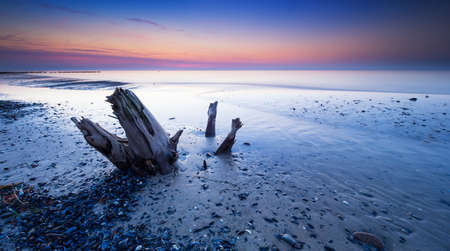 Beach with old tree Trunk and Mussels after sunset, Darss peninsula, Germany