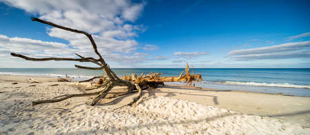 Fallen Beech Tree on Sand Beach, Baltic Sea, Darss Peninsula, Germany