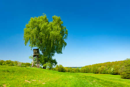 Birch tree with fresh green leaves in spring landscape under blue sky Stock fotó