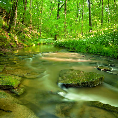 Stream through natural green forest in spring, wood garlic in bloom