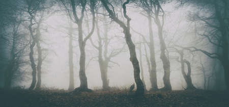 Haunted Forest of Spooky Trees in Thick Fog, vintage fx