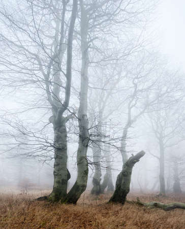 Forest of Bare Trees at Thick Fog