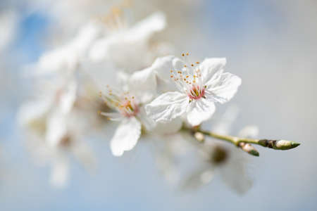 Soft background image of innocent white in spring Stock fotó
