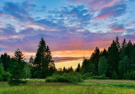 Lichtung im Naturwald nach Sonnenuntergang