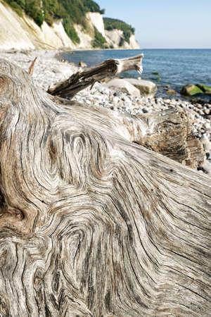 Driftwood with Cracks against the Chalk Cliffs of Rugen Island, Jasmund National Park, Germany