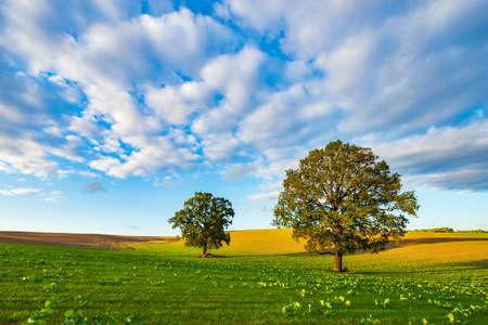 Campo verde con viejo roble solitario bajo un cielo azul en la cálida luz del sol poniente