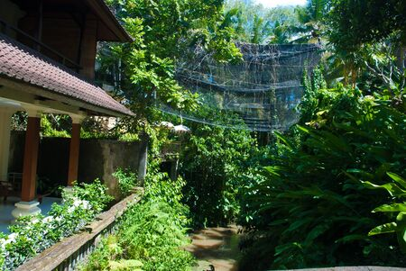thickets: Thickets Of Ubud Stock Photo