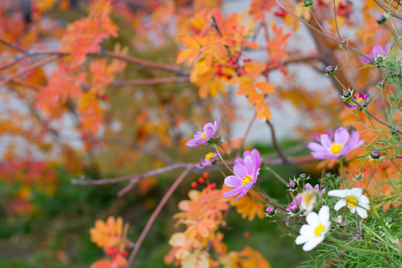 saturated: Summer flowers in a saturated autumn blurred background Stock Photo