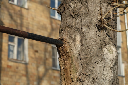 deformation: Ingrown metal pipe in the tree bark. Deformation and life of the tree under the influence of foreign objects Stock Photo