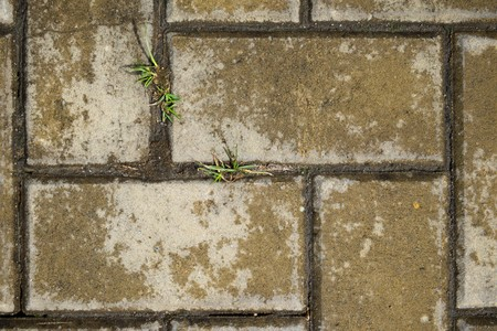 weed block: the texture of concrete tiles with grass