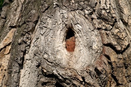 deepening: small hollow in a tree trunk