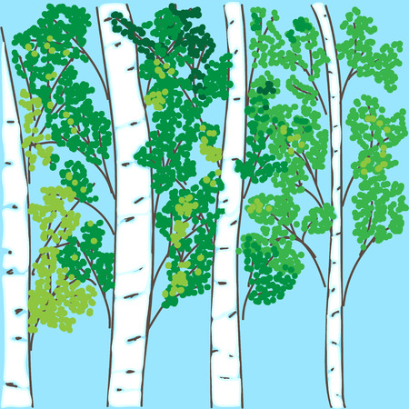 coppice: hand-drawing the birch grove on a blue background