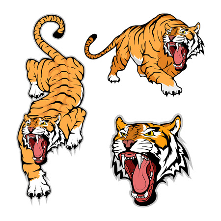 Tiger set, isolated on white background, color illustration, suitable as logo or team mascot
