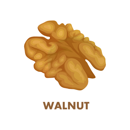 Nut food. Walnut isolated on white background. Healthy nutrition.