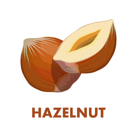 Nut food. Hazelnut isolated on white background. Healthy nutrition.