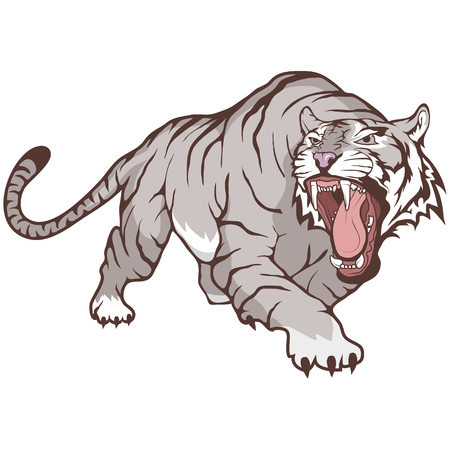 white bengal tiger Vector illustration. Çizim