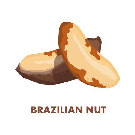Brazilian nut isolated on white background.