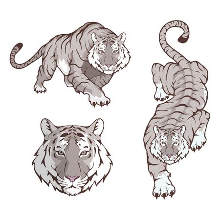 Conjunto de tigre aislado sobre fondo blanco.