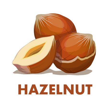 Nut food like  Hazelnut isolated on white background. Vettoriali