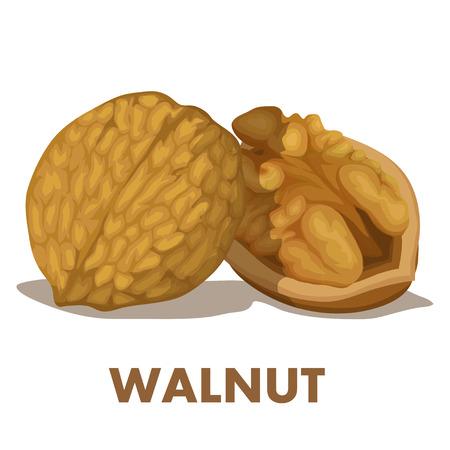 Walnut. Nut food. Isolated on white background. Healthy nutrition. Illustration