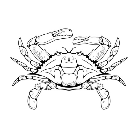 Atlantic crab vector image isolated on white background. Ocean delicacies collection.