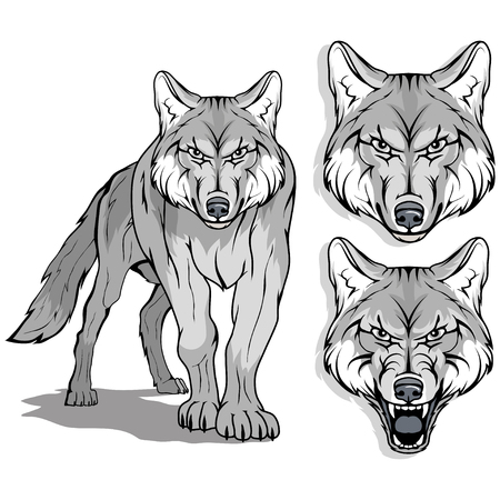 Wolf in different facial expressions, vector illustration isolated on white background.