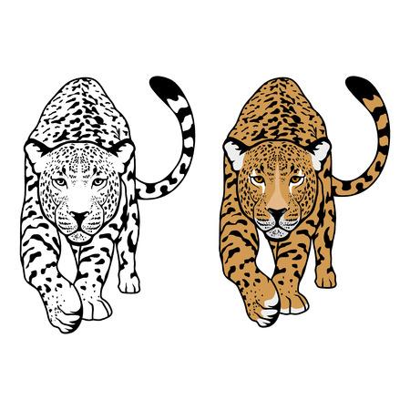 Leopard-Vektor-Illustration isoliert auf weißem Hintergrund. Vektorgrafik