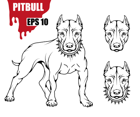 Pit bull terrier icon.Dog collection Illustration