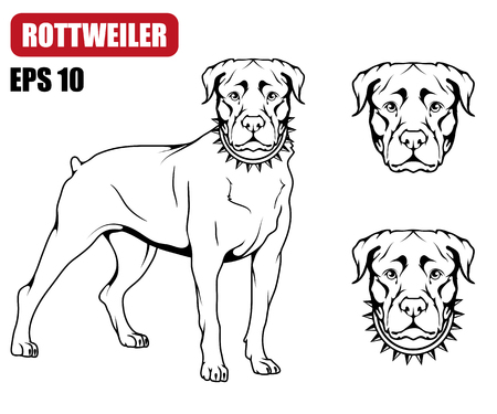 Rottweiler icon. Dog collection Vector illustration.