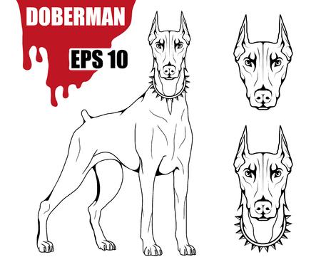 Doberman dog icon. Dog collection Vector illustration.