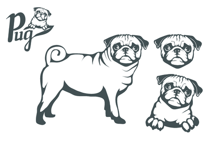 Pug dog set. Head of an pug. Pets for design. Vector graphics to design Standard-Bild - 100487262