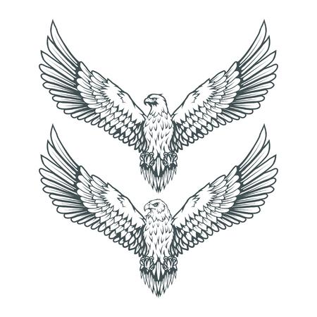 set of eagles. Bald eagle logo. Wild birds drawing. Head of an eagle. Vector graphics to design Illustration