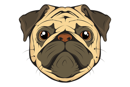 Pug dog set. Head of an pug. Pets for design. Vector graphics to design