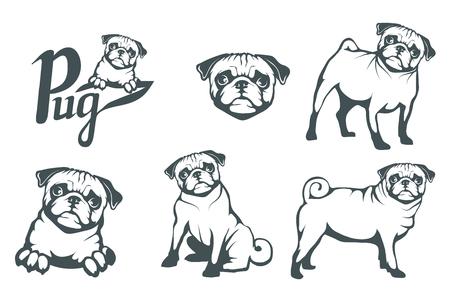 Pug dog set. Head of an pug. Pets for design. Vector graphics to design