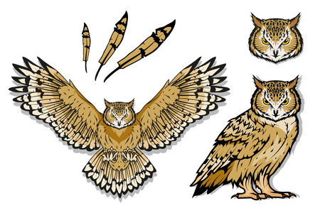 Owl logo. Wild birds drawing. Head of an owl. Vector graphics to design Vectores