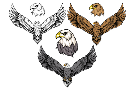 American eagle set. Bald eagle. Wild birds drawing. Head of an eagle. Vector graphics to design
