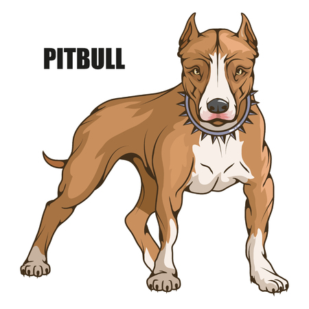 pit bull terrier vector illustration