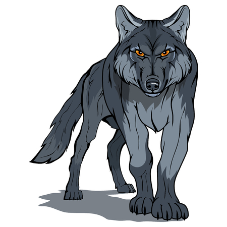 wolf, isolated on white background vector illustration